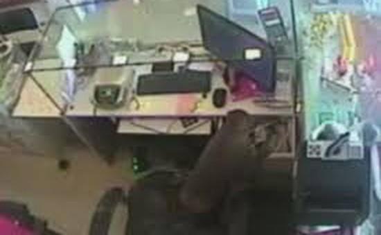 Khỉ táo tợn trộm tiền trong tiệm vàng ở Ấn Độ