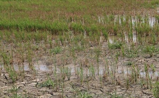 Số ca sốt xuất huyết  tại Nam Bộ và Tây Nguyên tăng do xâm nhập mặn