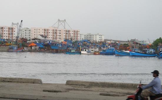 Đà Nẵng: Lập tổ giám sát xử lý ô nhiễm tại âu thuyền Thọ Quang