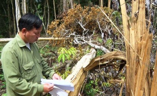 Bắt tạm giam, khởi tố nhóm phá rừng tại Đắk Mil, Đắk Nông