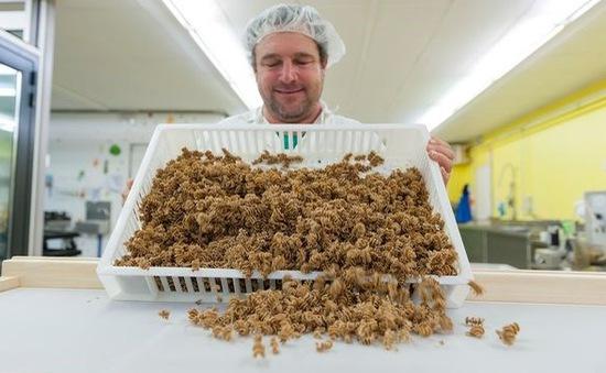 Bất ngờ với món mì pasta được làm từ côn trùng