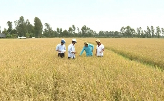 Liên kết tiểu vùng để tái cơ cấu nông nghiệp tại ĐBSCL