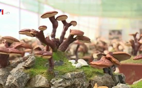 Nấm linh chi bonsai độc lạ hút khách dịp Tết Bính Thân