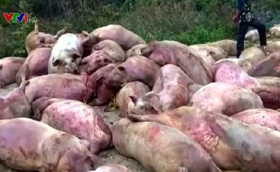 Bán lợn chết ra thị trường: Báo động ý thức về vấn nạn thực phẩm bẩn!