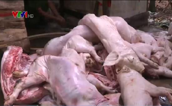 Đồng Nai triệt phá thành công hàng loạt cơ sở kinh doanh lợn bệnh chết