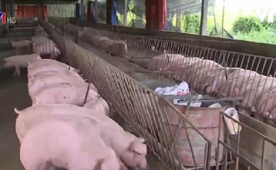 Giáo xứ nói không với chất cấm trong chăn nuôi