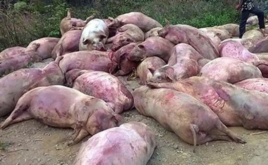 Hà Nam: Người dân vứt lợn chết gây ô nhiễm môi trường