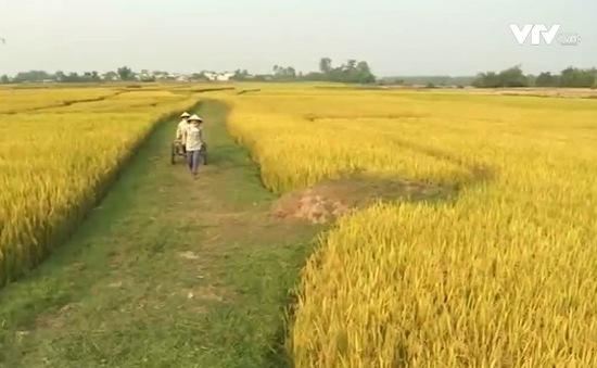 Trà Vinh chuyển đổi hơn 12.000 ha lúa kém hiệu quả