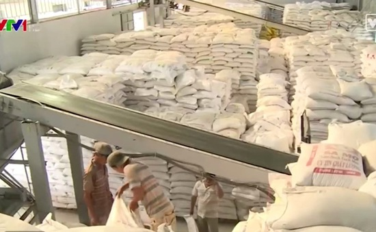 Giá lúa trong nước bị tác động bởi yếu tố tâm lý