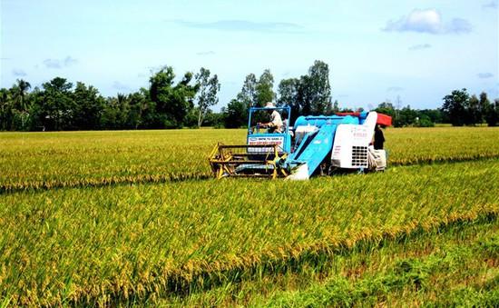 Tăng 10 - 20% giá lúa gạo Việt Nam sau áp dụng tiêu chuẩn SRP
