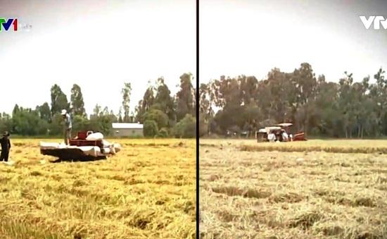 Cấp bách vấn đề xây dựng vùng nguyên liệu để quản lý chất lượng gạo