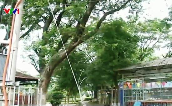 Báo động tình trạng mất an toàn lưới điện tại miiền Trung - Tây Nguyên