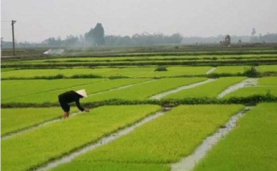 Chuẩn bị nước sản xuất vụ Đông Xuân