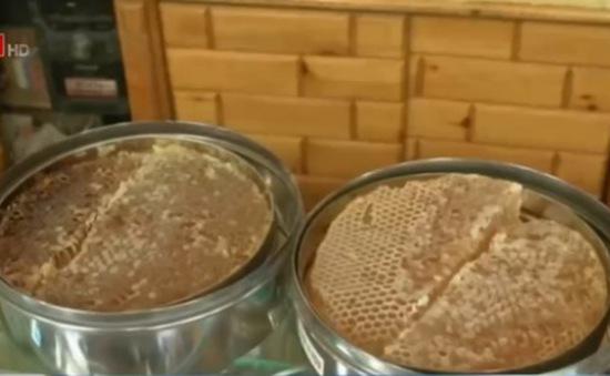 Ngành sản xuất mật ong của Yemen chao đảo do nội chiến
