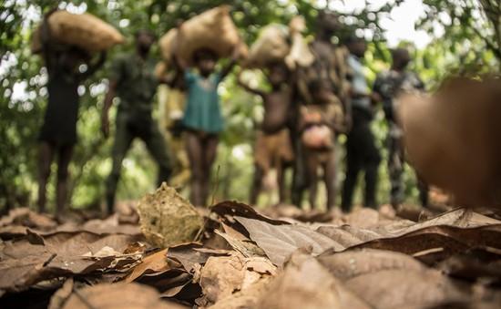 Bờ biển Ngà nỗ lực chống tình trạng lao động trẻ em