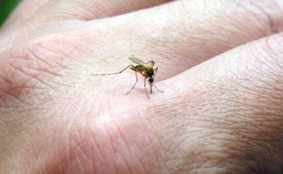 Phát hiện virus nguy hiểm như virus Zika