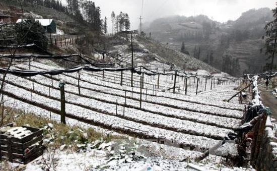 Sa Pa, Lào Cai chìm trong tuyết trắng