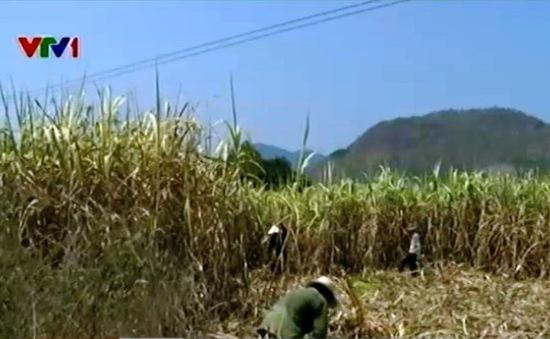 Đất bỏ hoang, hàng nghìn gia đình trước nguy cơ thiếu đói