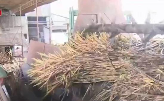 Nhiều nhà máy đường ở Hậu Giang ngưng hoạt động vì thiếu nguyên liệu