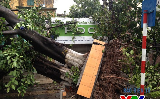 Cây lớn đổ gây mất điện, đơn vị chức năng cưa cắt ngay trong mưa