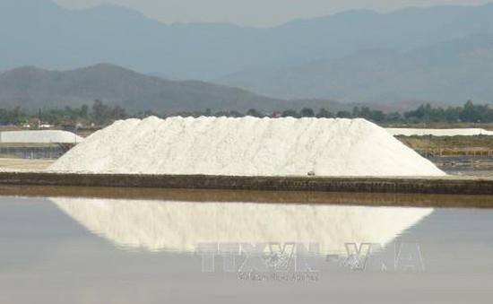 Thu mua tạm trữ được gần 10.000 tấn muối