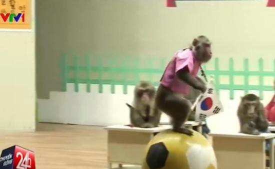 Năm chú khỉ và những câu chuyện thú vị