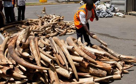 Tội phạm môi trường gia tăng trên toàn cầu