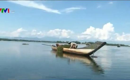 TT-Huế: Rà soát, hỗ trợ ngư dân bị ảnh hưởng do cá chết