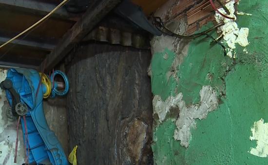 Cây cổ thụ chen lấn, hàng chục người dân thấp thỏm sống trong dãy nhà chờ sập