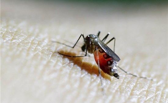 Trung Quốc ghi nhận ca nhiễm virus Zika thứ 2