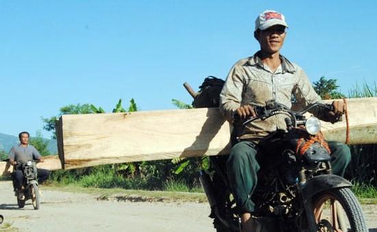 Ngang nhiên vận chuyển gỗ trái phép ra khỏi rừng tại Kon Tum