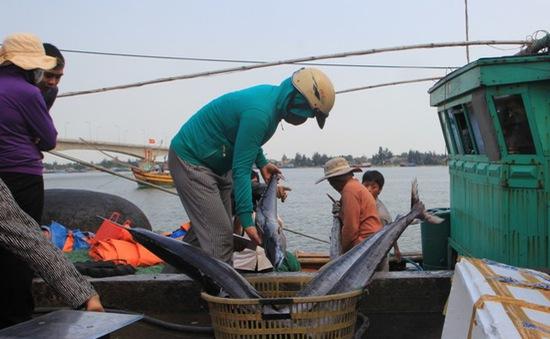TT-Huế hỗ trợ 5 tỷ đồng cho ngư dân đánh bắt xa bờ
