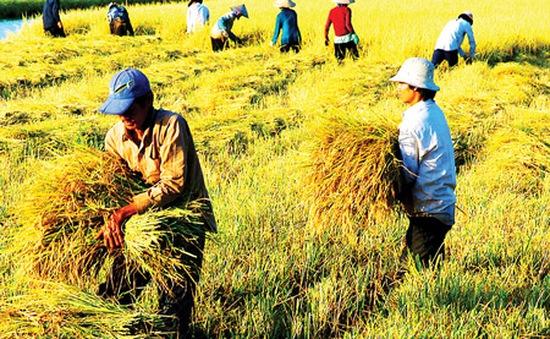 Nông nghiệp tăng trưởng dương trở lại