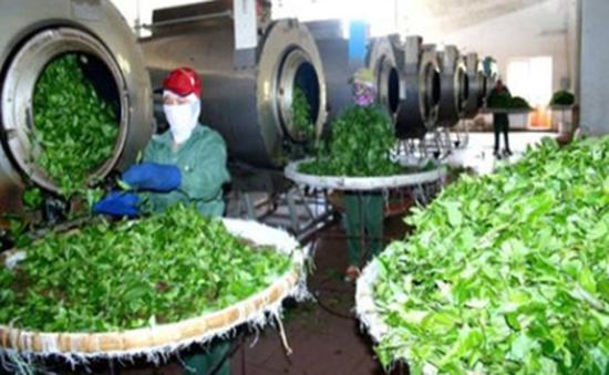 """Nông sản Việt xuất khẩu nhiều nhưng vẫn """"vô danh"""""""