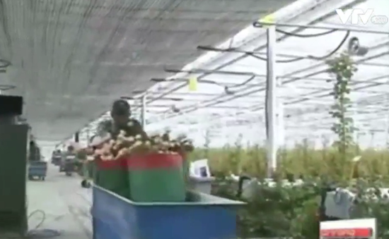 Độc đáo mô hình nông trại thông minh tại Hàn Quốc