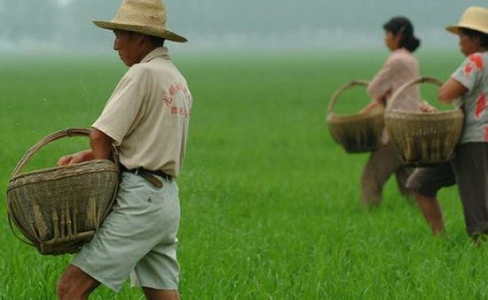 Trung Quốc đầu tư 450 tỷ USD hiện đại hóa nông nghiệp