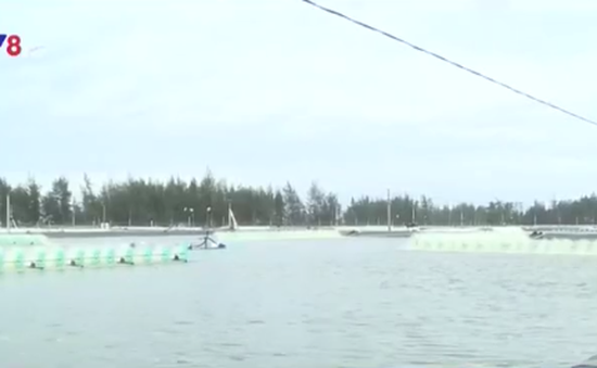 Thanh Hóa: Nước nhiễm mặn vì dự án nuôi tôm trên cát