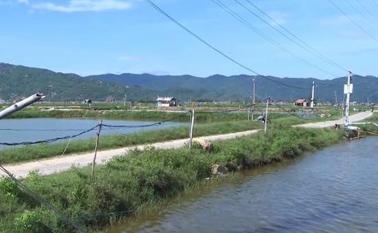 Phú Yên: Muôn kiểu kéo điện về hồ nuôi tôm gây mất an toàn