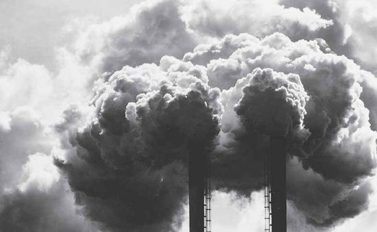 Thực trạng đáng lo ngại từ tội phạm môi trường