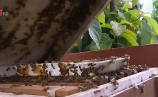 Ít hộ nuôi ong Sơn La được cấp nhãn hiệu tập thể