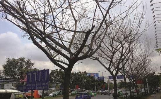 TP.HCM xử lý nghiêm các trường hợp phá hoại cây xanh