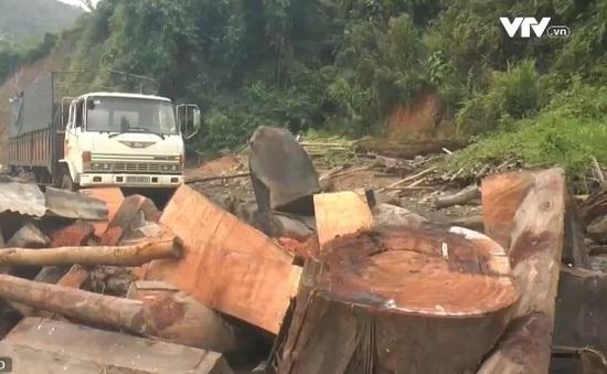 Triệt phá băng nhóm lâm tặc phá rừng quy mô lớn