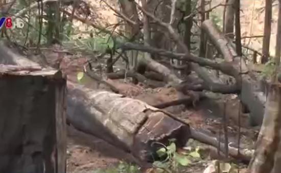 Kon Tum: Người dân phá rừng làm nương rẫy tràn lan