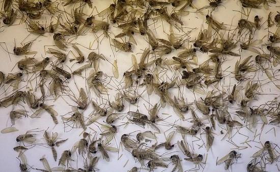 Muỗi xuất hiện nhiều bất thường ở các khu dân cư Bạc Liêu