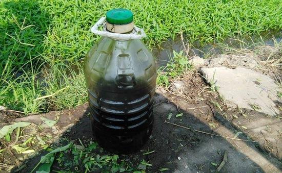 Bắt quả tang chủ ruộng tưới rau muống bằng dầu nhớt ở TP.HCM
