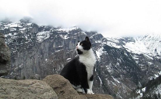 Chú mèo giúp du khách đi lạc tìm được đường về