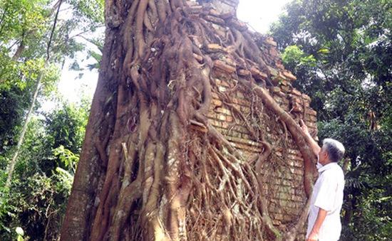 Kỳ bí cây bồ đề che chở am cổ hàng trăm năm tuổi