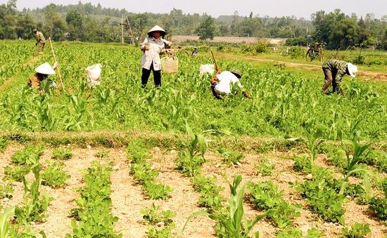 Ổn định lương thực nhờ thích ứng biến đổi khí hậu