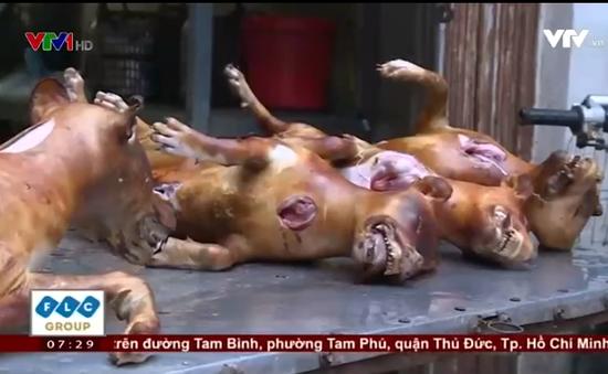 Nhiều người quay lưng với nghề giết mổ, kinh doanh thịt chó