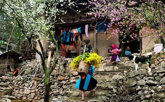 Thiên nhiên và phong tục Tết độc đáo ở vùng núi Việt Nam